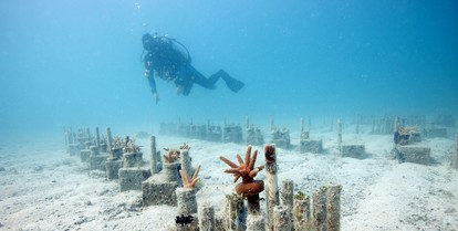 Coral Reef Restoration Research Efforts