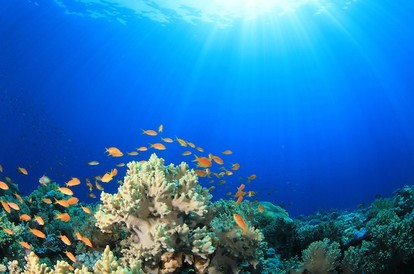 Reefs Grow by Crawling Along the Sea Floor