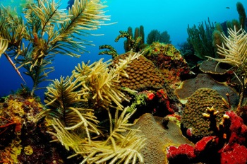 Hot Weather Puts Corals at Risk