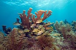 Ocean Acidification Study Reveals Dangers to New Corals