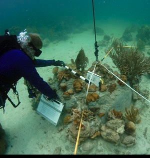 A sanctuary biologist takes baseline measurements of the restored reef at Cheeca Rocks.