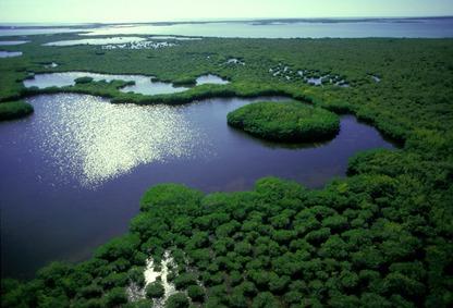 Wetlands, Florida Everglades. Photo by Stephen Frink.