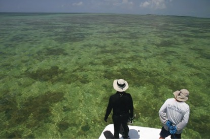 Scientists observe, identify and document sea turtles in the Key West National Wildlife Refuge