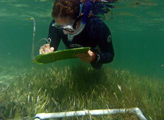 Seagrass Restoration & Monitoring