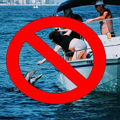 Feeding wildlife is harmful & illegal. Photo: NOAA