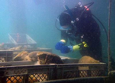 Coral Rescue