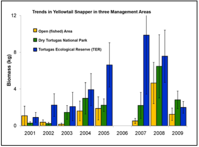 Trends in Yellowtail Snapper in Three Management Areas