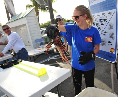 REEF Lionfish staff, Emily Stokes, measuring a lionfish at a derby this summer. Photo by Sarah Schindehette