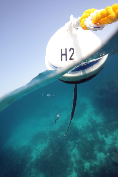 Mooring Buoys Protect Coral Reefs!
