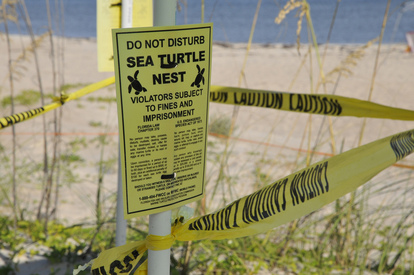 Do not disturb sea turtle nests
